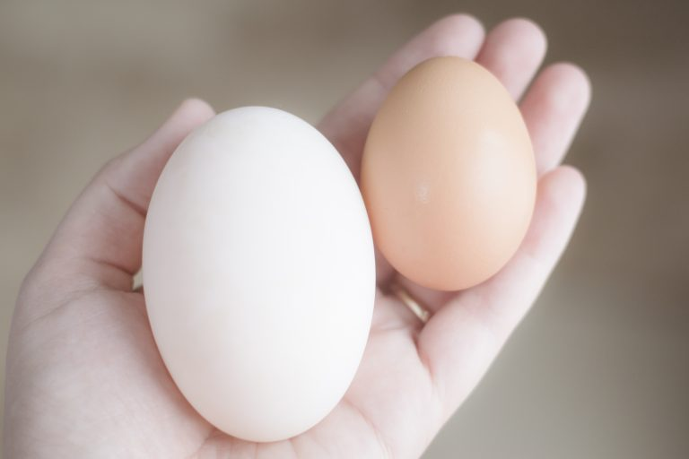 Chicken Eggs vs Duck Eggs