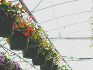 2019 Gardeners Gift Guide