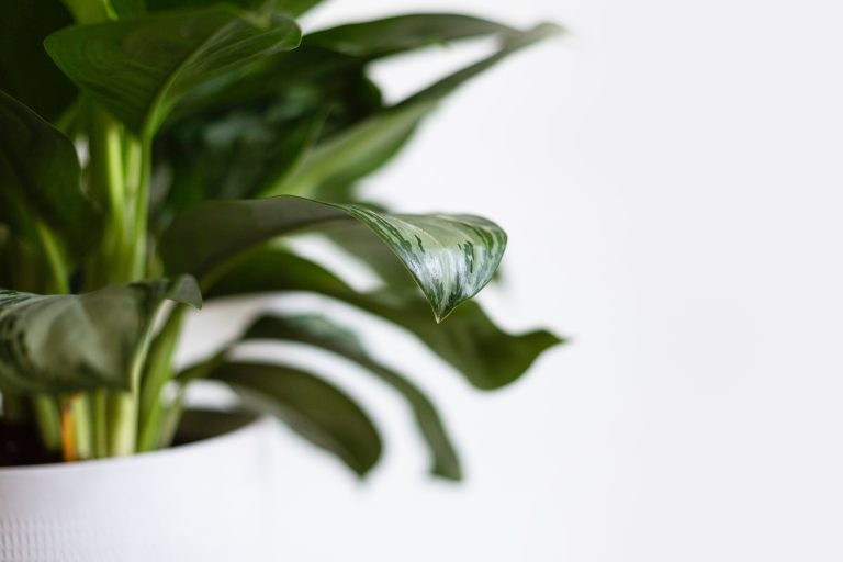 20 Best Indoor Plants That You Can't Kill