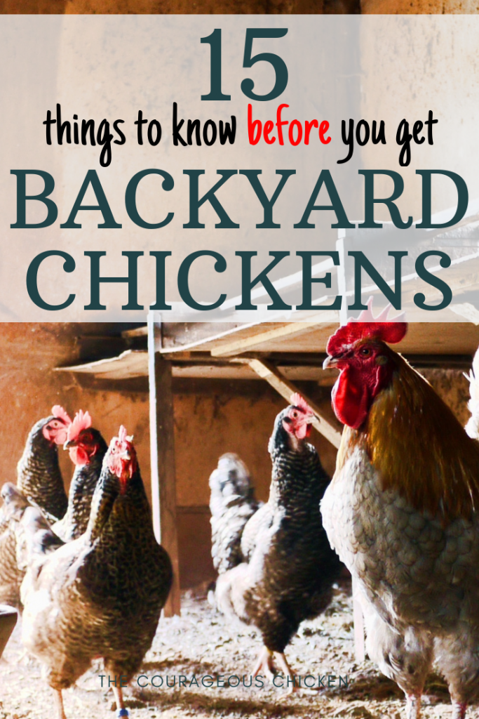 before you get chickens