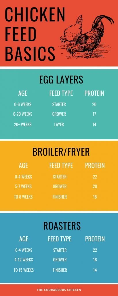 Chicken Feed Infograph